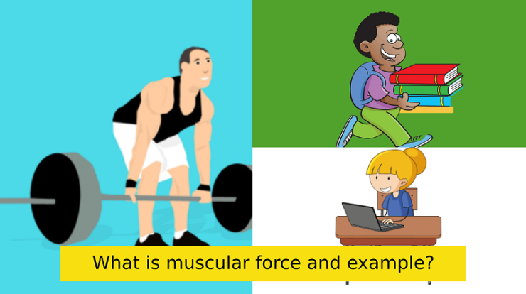 What is muscular force and example